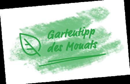 werner-rausch-startseite-gartentipp-des-monats-768w